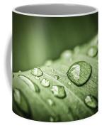 Rain Drops On Green Leaf Coffee Mug by Elena Elisseeva
