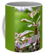 Raindrops On Sedum Coffee Mug