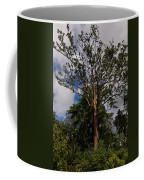 Rainbow Eucalyptus - Tall Proud And Beautiful Coffee Mug