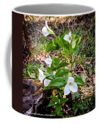 Rare Great White Trilliums Coffee Mug