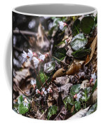 Rare Spring Beauty Coffee Mug