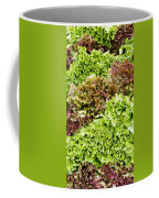 Red And Green Leaf Lettuce  Coffee Mug