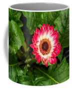 Red And White Gerber Daisy Coffee Mug