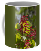 Red Buckeye - Aesculus Pavia - Wildflowers Coffee Mug