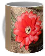 Red Cactus Flower Square Coffee Mug