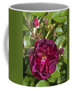 Red Climbing Rose Coffee Mug