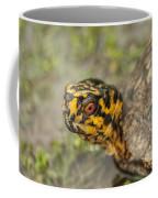 Red Eyed Alabama Box Turtle - Terrapene Carolina Coffee Mug