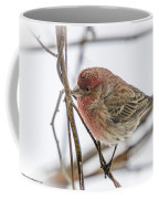 Red Finch Coffee Mug
