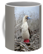 Red-footed Booby Coffee Mug