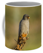 Red Footed Falcon Falco Vespertinus 4 Coffee Mug