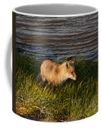 Red Fox Hunting The Edges At Sunset Coffee Mug