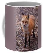 Red Fox In Prospect Park Coffee Mug