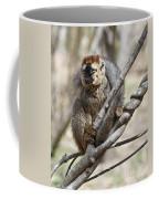 Red-fronted Lemur  Eulemur Rufifrons Coffee Mug
