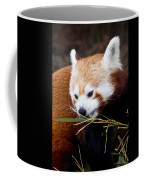 Red Panda  Ailurus Fulgens In Captivity Coffee Mug