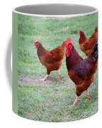 Red Rooster And Hens Coffee Mug