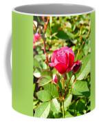 Pink Rose Buds Coffee Mug