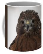 Red Shouldered Hawk Close Up Coffee Mug