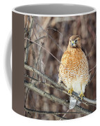 Red-shouldered Hawk Front View Square Coffee Mug