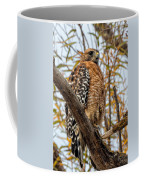 Red-shouldered Hawk In A Willow Tree Coffee Mug