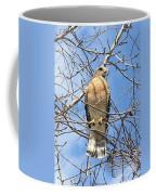 Red Shouldered Hawk In Tree Coffee Mug
