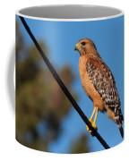 Red-shouldered Hawk On A Wire Coffee Mug