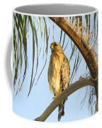 Red-shouldered Hawk On The Palm Tree Coffee Mug