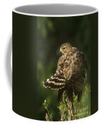 Red-shouldered Hawk Wild Texas Coffee Mug