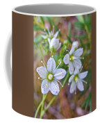 Red-spotted Saxifrage Along Horseshoe Lake Trail In Denali Np-ak  Coffee Mug
