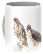 Red Tail Hawk Pair On White Background Coffee Mug