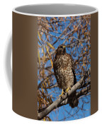 Red-tailed Hawk In A Willow Tree Coffee Mug