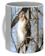 Red-tailed Hawk Looking Coffee Mug