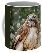 Red-tailed Hawk Square Coffee Mug by Bill Wakeley