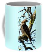 Red Tailed Interest Coffee Mug