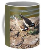 Red-wattled Lapwing Coffee Mug