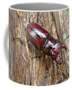 Reddish-brown Stag Beetle - Lucanus Capreolus Coffee Mug