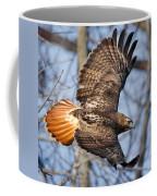 Redtail Hawk Square Coffee Mug by Bill Wakeley