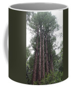 Redwood Fairy Ring Close Coffee Mug