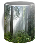 Redwood Forest With Sunbeams Coffee Mug