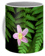 Redwood Sorrel Wildflower Nestled In Ferns Coffee Mug