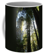 Redwoods IIII Coffee Mug