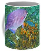 Reef Life Coffee Mug by John Malone