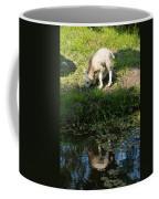 Reflected Cute Little Lamb Coffee Mug