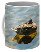 Reflective Mallard Resting Coffee Mug