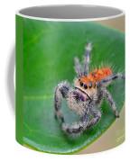 Regal Jumping Spider Coffee Mug
