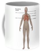 Respiratory System In Female Anatomy Coffee Mug