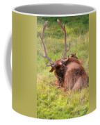 Resting Elk Coffee Mug