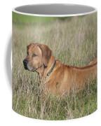 Rhodesian Ridgeback Dog Coffee Mug