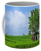 Rice Fields Coffee Mug by Nila Newsom