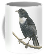 Ring Ouzel  Coffee Mug by Anonymous
