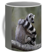 Ring-tailed Lemur Lemur Catta  Coffee Mug